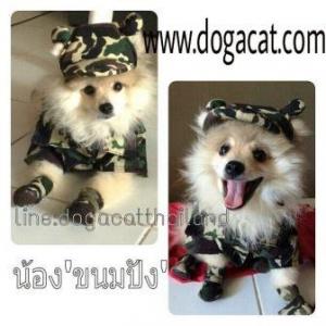 น้องขนมปังกับชุด combo set เสื้อสุนัข เสื้อหมา เสื้อน้องหมา เสื้อผ้าหมา เสื้อแมว เสื้อผ้าสุนัข เชิ๊ตทหาร สีเขียว