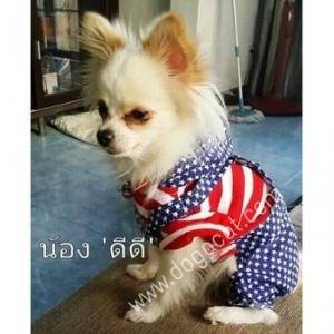น้องดีดีกับเสื้อสุนัข เสื้อหมา เสื้อน้องหมา เสื้อผ้าหมา เสื้อแมว เสื้อผ้าสุนัข ชุดเอี๊ยมยืด Polka Dot ลายสหรัฐ