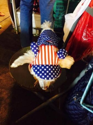 น้องทาโร่ใส่combo set เสื้อสุนัข เสื้อหมา เสื้อน้องหมา เสื้อผ้าสุนัข เสื้อผ้าหมา เสื้อแมว ชุดเอี๊ยมยืด Polka Dot ลายสหรัฐ หมวกสุนัขมีหู
