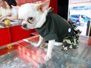 น้องมันนี่ เสื้อสุนัข ชุดเดรสทหาร