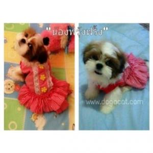น้องฟรุ้งฟริ้งกับเสื้อสุนัข เสื้อหมา เสื้อน้องหมา เสื้อผ้าหมา เสื้อแมว เสื้อผ้าสุนัข ชุดเดรส สาบลูกไม้ สีแดง