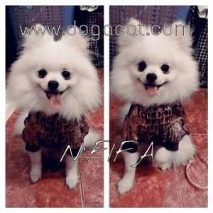 น้องฟีฟ่าใส่เสื้อสุนัข เสื้อหมา เสื้อน้องหมา เสื้อผ้าหมา เสื้อแมว เสื้อผ้าสุนัข แฟนซีลายจรเข้