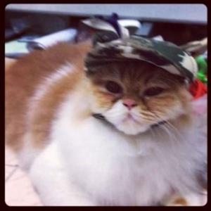 น้องมีมี่ ใส่หมวกสุนัขมีหู ลายทหาร