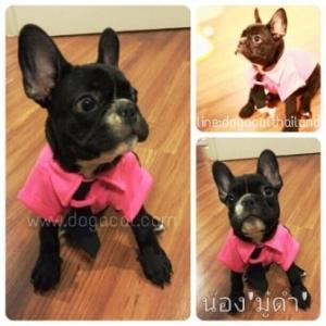 น้องมู๋ดำใส่เสื้อสุนัข เสื้อหมา เสื้อน้องหมา เสื้อผ้าหมา เสื้อแมว เสื้อผ้าสุนัข ชุดโปโล มีไทด์ มีอินธนู สีชมพู