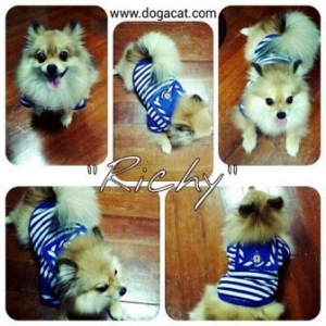 น้องริชชี่กับเสื้อสุนัข เสื้อหมา เสื้อน้องหมา เสื้อผ้าหมา เสื้อแมว เสื้อผ้าสุนัข ชุดทหารเรือ สีน้ำเงิน