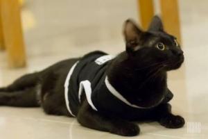 น้องลูกน้ำใส่เสื้อสุนัข เสื้อหมา เสื้อน้องหมา เสื้อผ้าสุนัข เสื้อผ้าหมา เสื้อแมว เสื้อยืด สีดำ มีกระเป๋าลายจุด