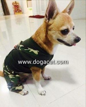 น้องอั่งเปาใส่เสื้อสุนัข เสื้อหมา เสื้อน้องหมา เสื้อผ้าหมา เสื้อแมว เสื้อผ้าสุนัข เอี๊ยมยืดทหาร