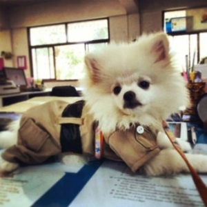 น้องฮังเล ในชุดเสื้อสุนัข ชุดข้าราชการ