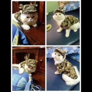 น้องเชลซีกับcombo set เสื้อสุนัข เชิ๊ตทหารสีน้ำตาล หมวกสุนัขมีหู