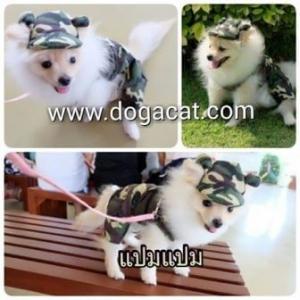 น้องแปมแปมใส่เสื้อสุนัข เสื้อหมา เสื้อน้องหมา เสื้อผ้าหมา เสื้อแมว เสื้อผ้าสุนัข เอี๊ยมยืดทหาร