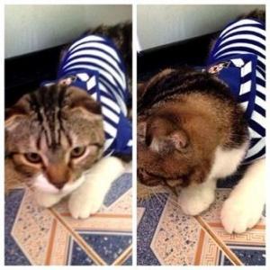 น้องโกโก้ เสื้อสุนัข ชุดทหารเรือ สีน้ำเงิน