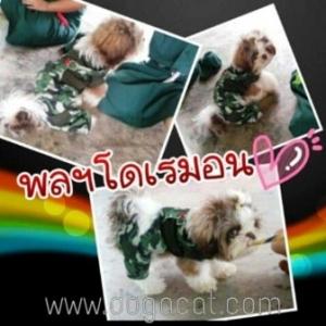 น้องโดเรมอนใส่เสื้อสุนัข เสื้อหมา เสื้อน้องหมา เสื้อผ้าหมา เสื้อแมว เสื้อผ้าสุนัข เอี๊ยมยืดทหาร