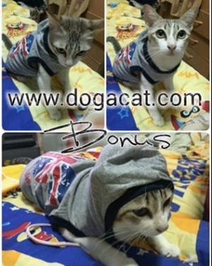 น้องโบนัสใส่เสื้อสุนัข เสื้อหมา เสื้อผ้าหมา เสื้อน้องหมา เสื้อแมว เสื้อผ้าสุนัข เสื้อยืด ลาย london สีเทา