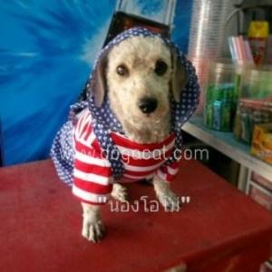 น้องโอโม่กับเสื้อสุนัข เสื้อหมา เสื้อน้องหมา เสื้อผ้าหมา เสื้อแมว เสื้อผ้าสุนัข ชุดเอี๊ยมยืด Polka Dot ลายสหรัฐ