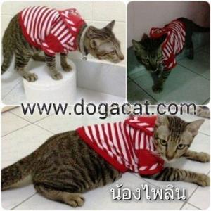 น้องไพลินใส่เสื้อสุนัข เสื้อหมา เสื้อน้องหมา เสื้อผ้าหมา เสื้อแมว เสื้อผ้าสุนัข ชุดทหารเรือ สีแดง
