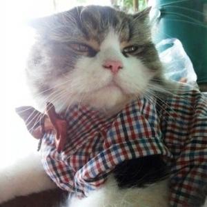 น้องยูโลกับเสื้อสุนัข สก๊อตเล็ก อินธนู โทนน้ำตาล