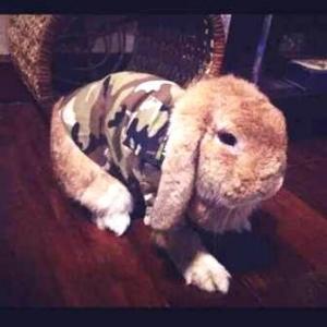 รีวิวกระต่ายกับเสื้อสุนัข เสื้อหมา เสื้อน้องหมา เสื้อผ้าหมา เสื้อแมว เสื้อผ้าสุนัข เชิ๊ตทหาร สีน้ำตาล