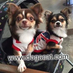 รีวิวน้องหมาใส่เสื้อสุนัข เสื้อหมา เสื้อน้องหมา เสื้อผ้าหมา เสื้อแมว เสื้อผ้าสุนัข เสื้อยืด ลาย london สีขาว