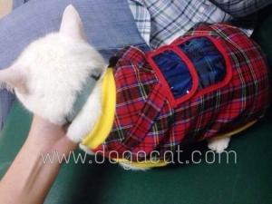 รีวิวน้องแมวใส่เสื้อสุนัข เสื้อหมา เสื้อน้องหมา เสื้อผ้าหมา เสื้อแมว เสื้อผ้าสุนัข เสื้อยืดสก๊อต มีเป้ สีแดง