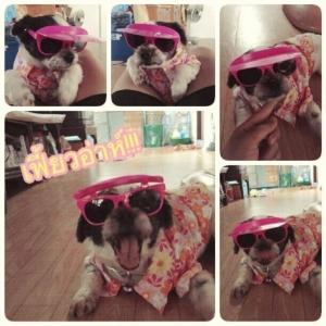 รีวิวเสื้อสุนัข เสื้อน้องหมา เสื้อหมา เสื้อผ้าสุนัข เสื้อผ้าหมา เสื้อแมว ลายดอก57 สีม่วง