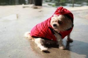 รีวิว เสื้อสุนัข เสื้อหมา เสื้อผ้าหมา เสื้อแมว เสื้อผ้าสุนัข เสื้อยืด ลายspider