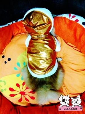 เสื้อสุนัข กันฝน สุดฮิป สีทอง by น้องถ้วยแก้ว