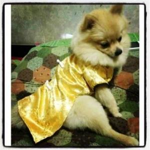 น้องที่รักในชุดเสื้อสุนัข ชุดจีน สีทอง