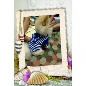 รีวิวเสื้อสุนัข ชุดทหารเรือ สีน้ำเงิน