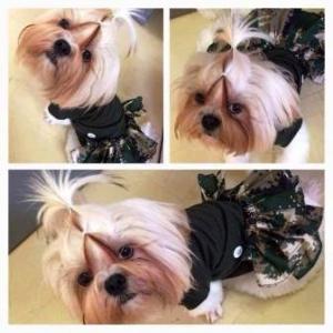 รีวิวเสื้อสุนัข ชุดเดรสทหาร