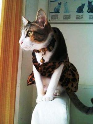 เสื้อสุนัข ชุดเดรส ลายเสือ by makuya tis