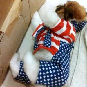 เสื้อสุนัข ชุดเอี๊ยมยืด Polka Dot ลายสหรัฐ รีวิว