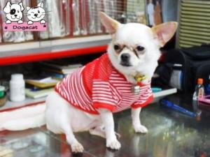 น้องพอใจชุดเสื้อสุนัข ตาข่ายV2 สีแดง