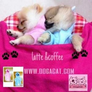 น้องลาเต้ น้องคอฟฟี่ เสื้อสุนัข ชุดกระต่าย สีชมพูและสีฟ้า