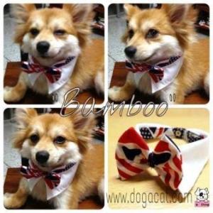 น้องแบมบูใส่ปลอกคอสุนัขทักซิโด้ ลายสหรัฐ