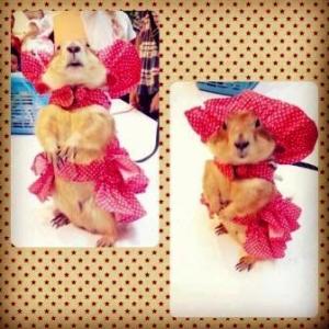 น้องเจได หมวกสุนัข ทรงหมวกตุ๊กตา สีแดง