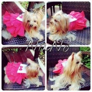 น้องนาโน ในชุดเสื้อสุนัข เดรสสายคล้อง กระโปรงลายจุด สีชมพู