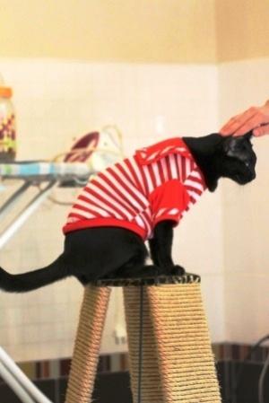 น้องลูกน้ำ เสื้อสุนัข ชุดทหารเรือ สีแดง