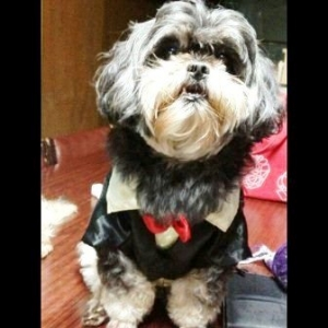 กาแฟ เสื้อสุนัข ชุดทักซิโด้ชาย สูทดำ