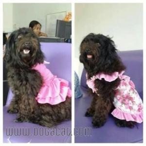 น้องถ้วยฟู เสื้อสุนัข ชุดเดรส ลายดอก สีชมพู v2
