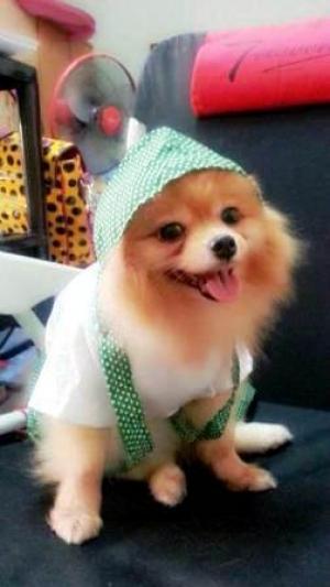 นายแบบ เสื้อสุนัข ชุดเอี๊ยมยืด Polka Dot ลายจุดเขียว