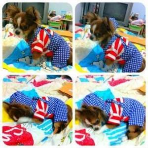 รีวิว เสื้อสุนัข ชุดเอี๊ยมยืด Polka Dot ลายสหรัฐ