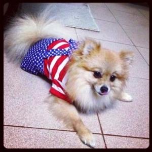 หมูปิ้ง เสื้อสุนัข ชุดเอี๊ยมยืด Polka Dot ลายสหรัฐ