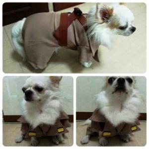 น้องนมสด เสื้อสุนัข ชุดโกโบริ