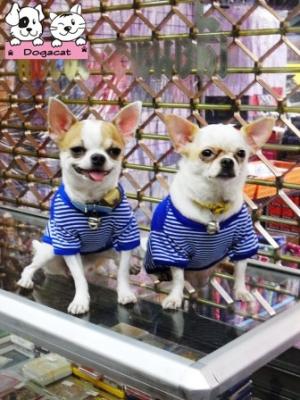 น้องพอใจและสตางค์ เสื้อสุนัข ตาข่ายV2 สีน้ำเงิน