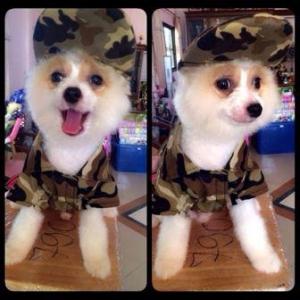 น้องขุมทรัพย์ กับหมวกแกปสุนัข หมวกแกปน้องหมา หมวกแกปหมา หมวกแกปแมว ลายทหาร สีน้ำตาล