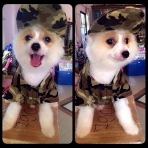 น้องขุมทรัพย์ กับcombo set เสื้อสุนัข เสื้อหมา เสื้อน้องหมา เสื้อผ้าสุนัข เสื้อผ้าหมา เสื้อแมว เชิ๊ตทหารสีน้ำตาล หมวกแกปสุนัข