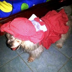 น้องแมมมี่ เสื้อสุนัข เดรสสายคล้อง กระโปรงลายจุด สีแดง หมวกสุนัข ทรงหมวกตุ๊กตา