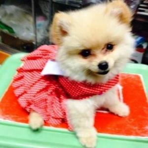 น้องโซดา เสื้อสุนัข เดรสสายคล้อง กระโปรงลายจุด สีแดง