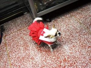 น้องพอใจ เสื้อสุนัข เดรสสายคล้อง กระโปรงลายจุด สีแดง