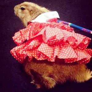 ของขวัญ เสื้อสุนัข เดรสสายคล้อง กระโปรงลายจุด สีแดง
